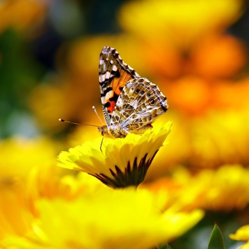 butterfly-169924_960_720